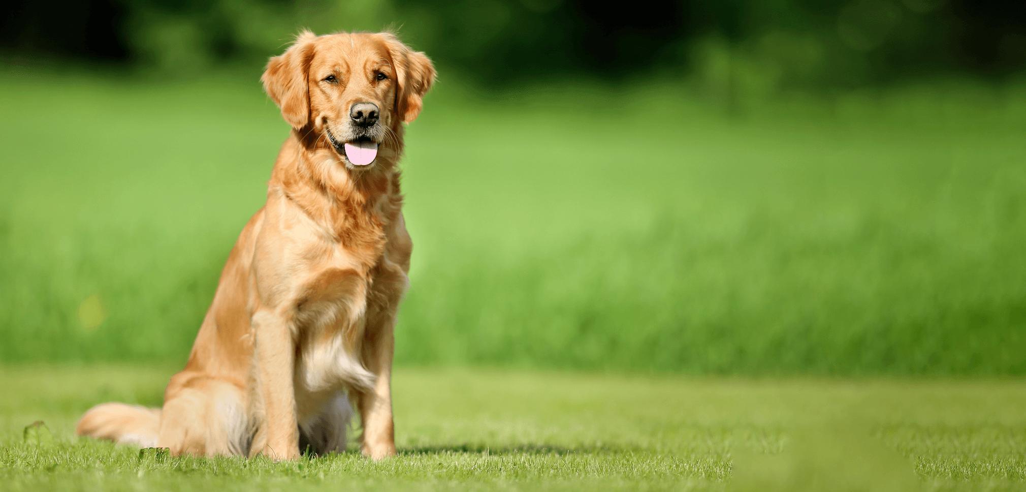 dogbg1